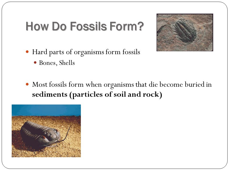 How Do Fossils Form Hard parts of organisms form fossils
