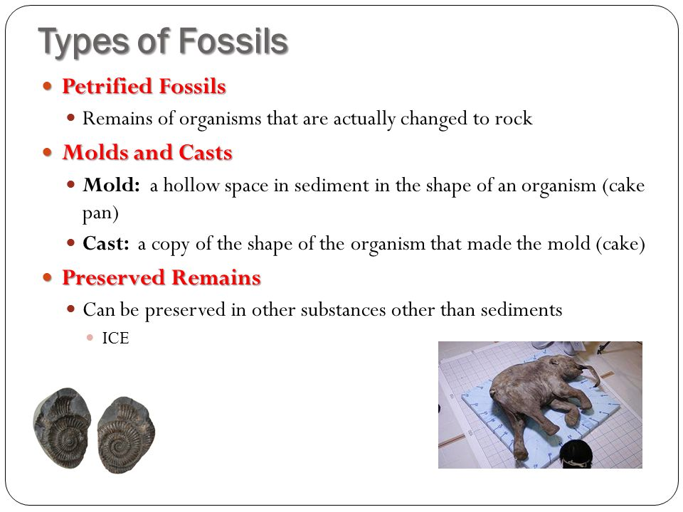 Types of Fossils Petrified Fossils Molds and Casts Preserved Remains