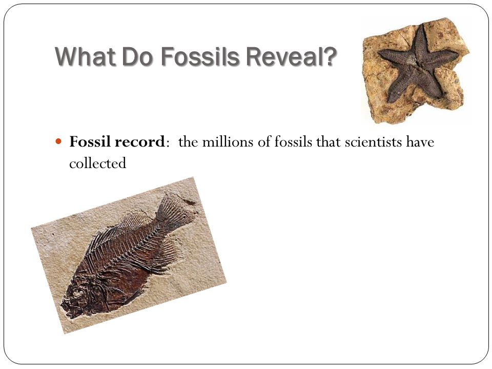 What Do Fossils Reveal Fossil record: the millions of fossils that scientists have collected