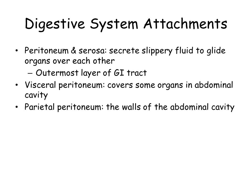 Digestive System Attachments