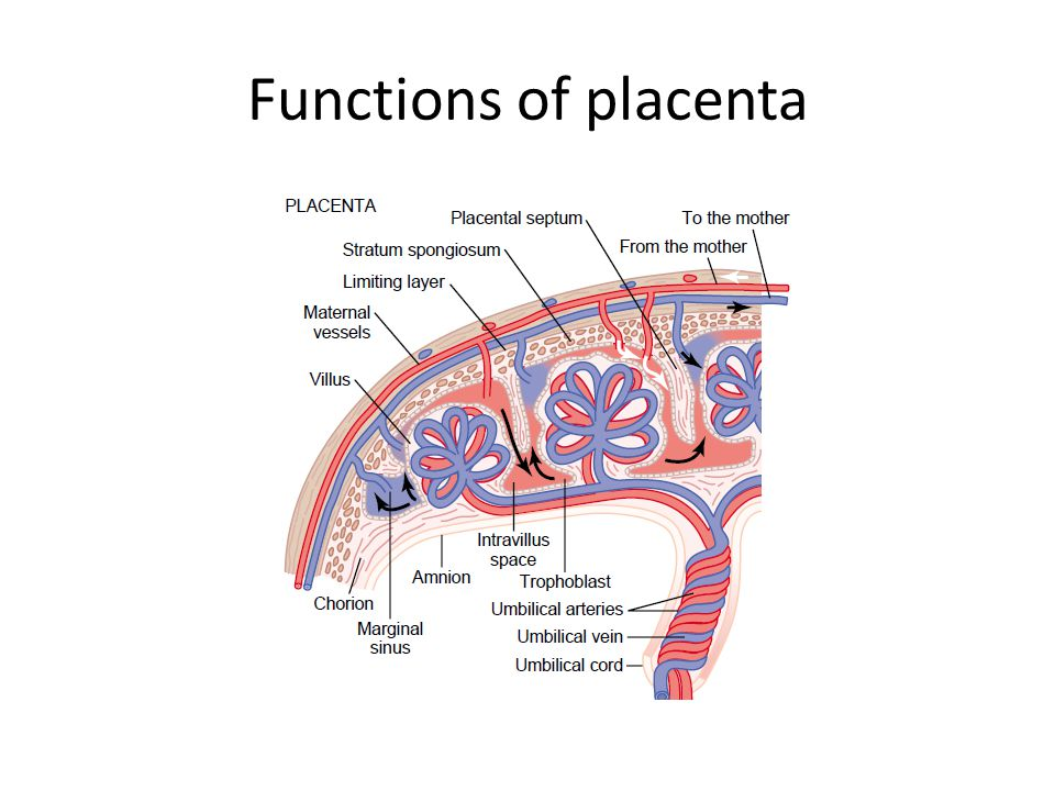 Functions of placenta