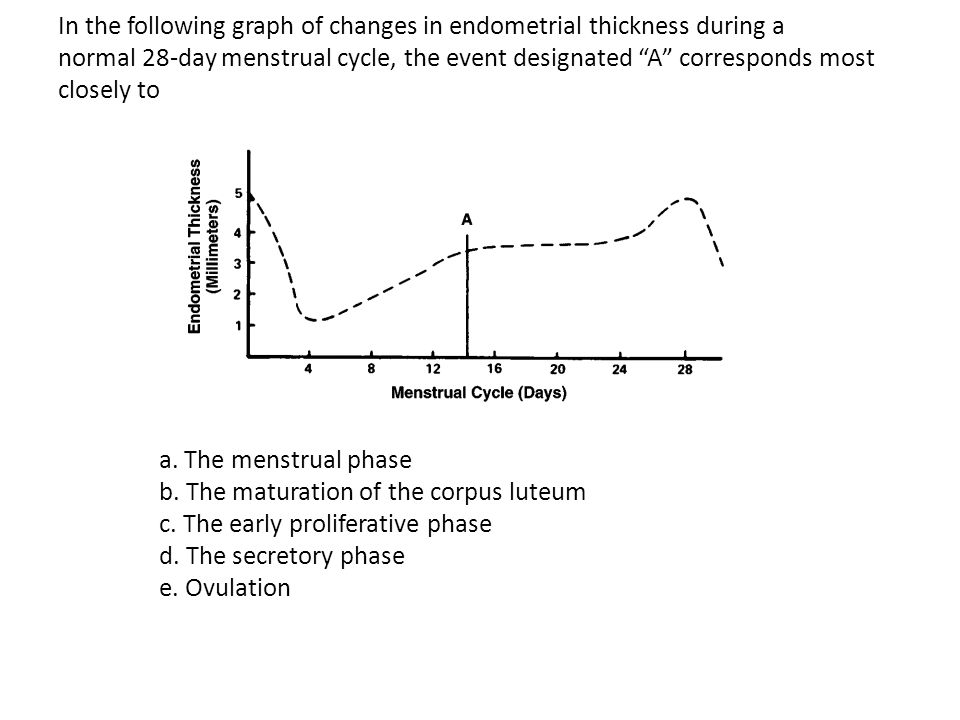 In the following graph of changes in endometrial thickness during a normal 28-day menstrual cycle, the event designated A corresponds most closely to