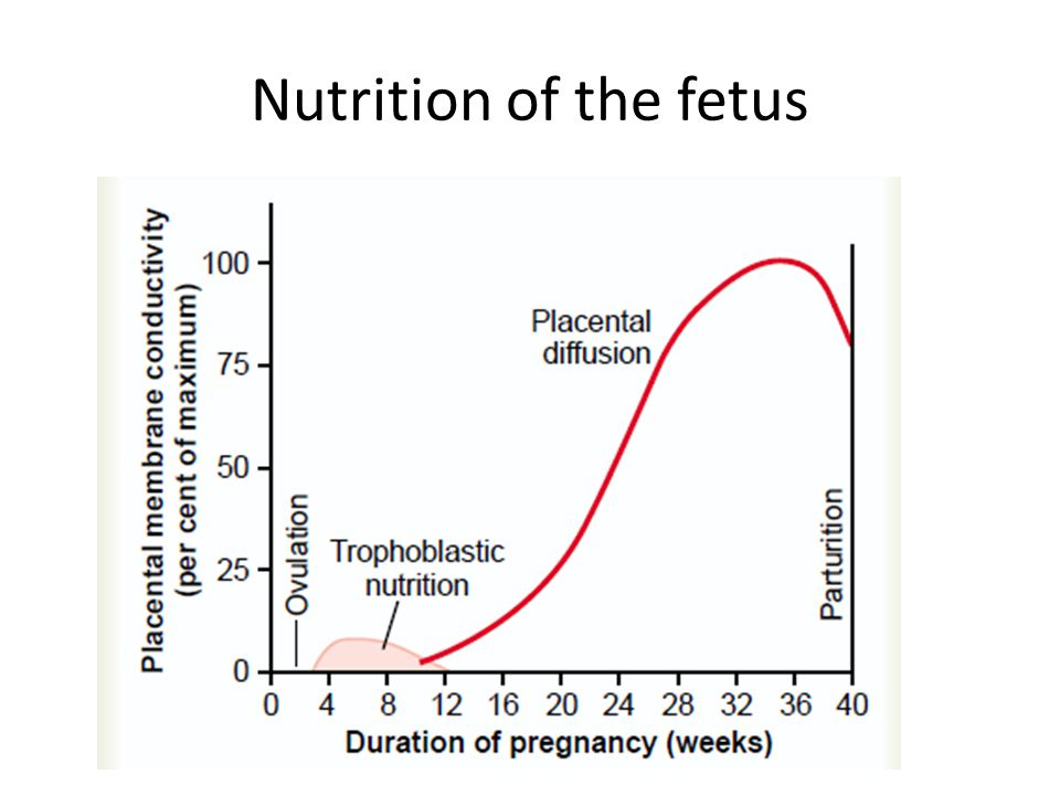 Nutrition of the fetus