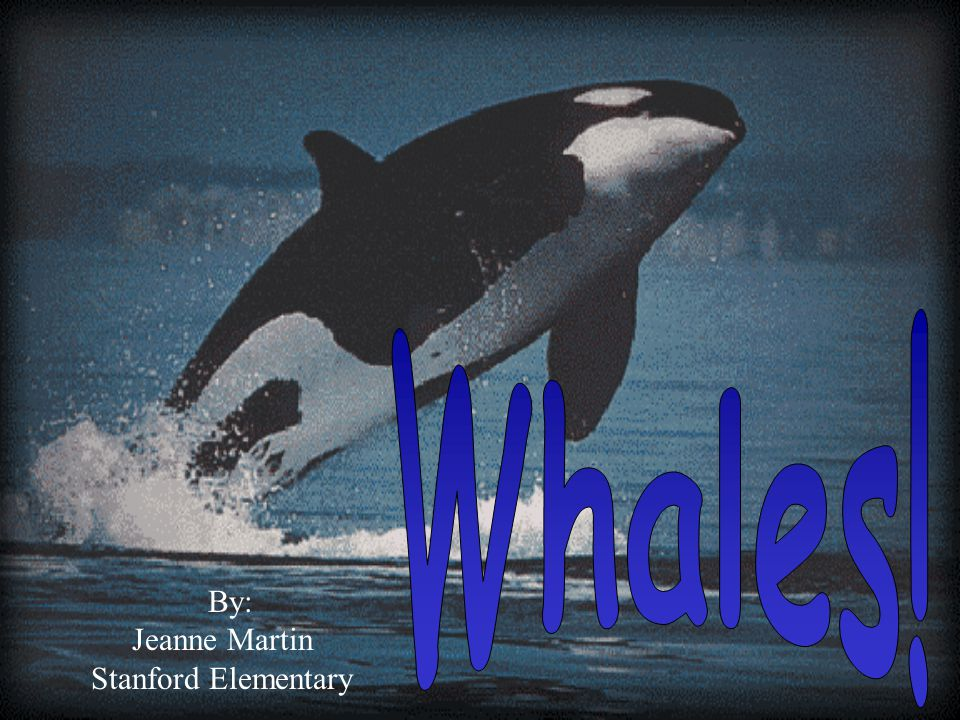 Whales! By: Jeanne Martin Stanford Elementary