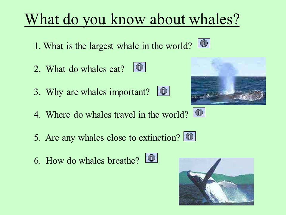 What do you know about whales
