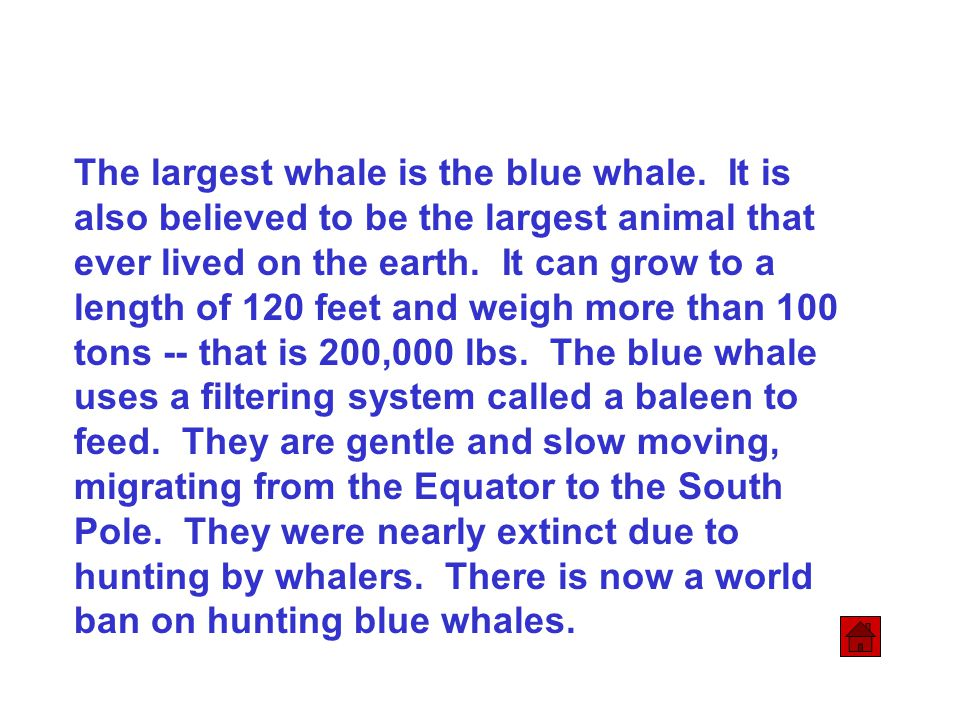 The largest whale is the blue whale