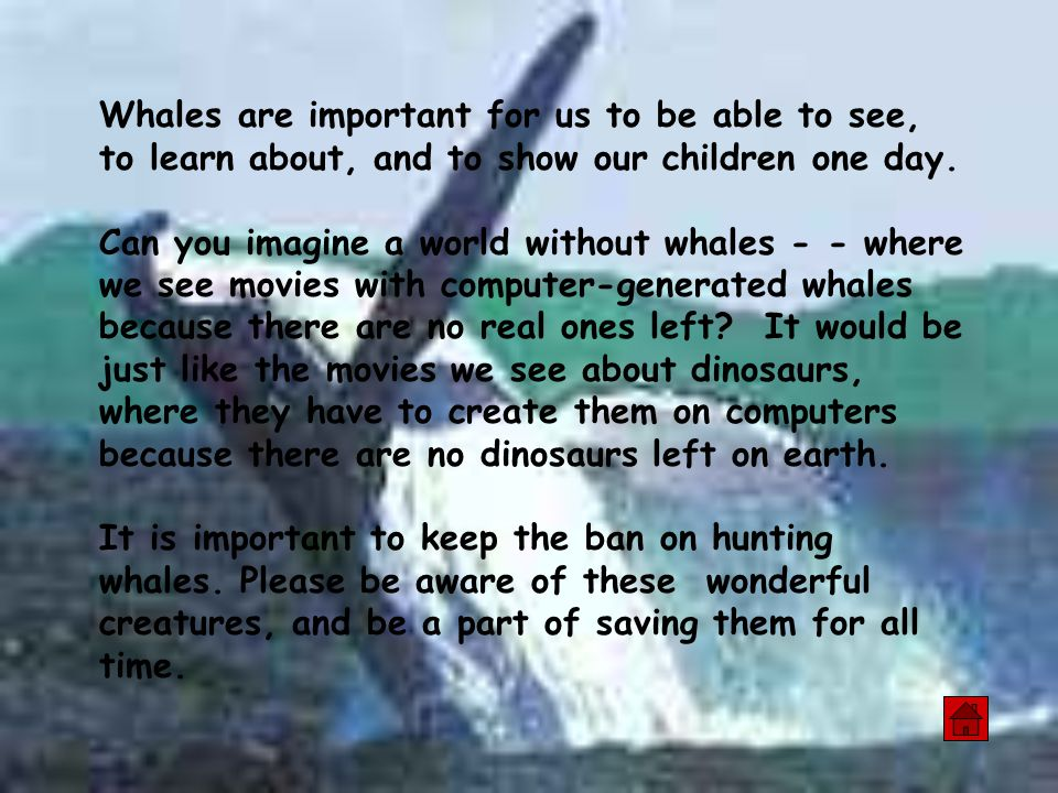 Whales are important for us to be able to see, to learn about, and to show our children one day.