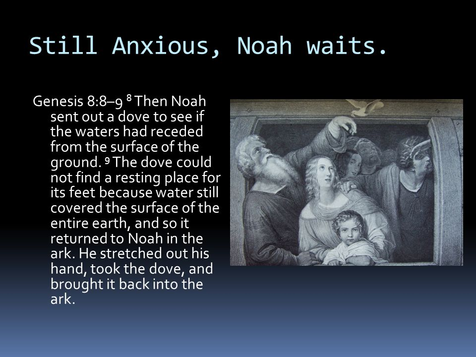 Still Anxious, Noah waits.