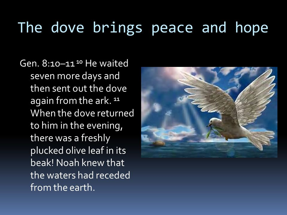The dove brings peace and hope
