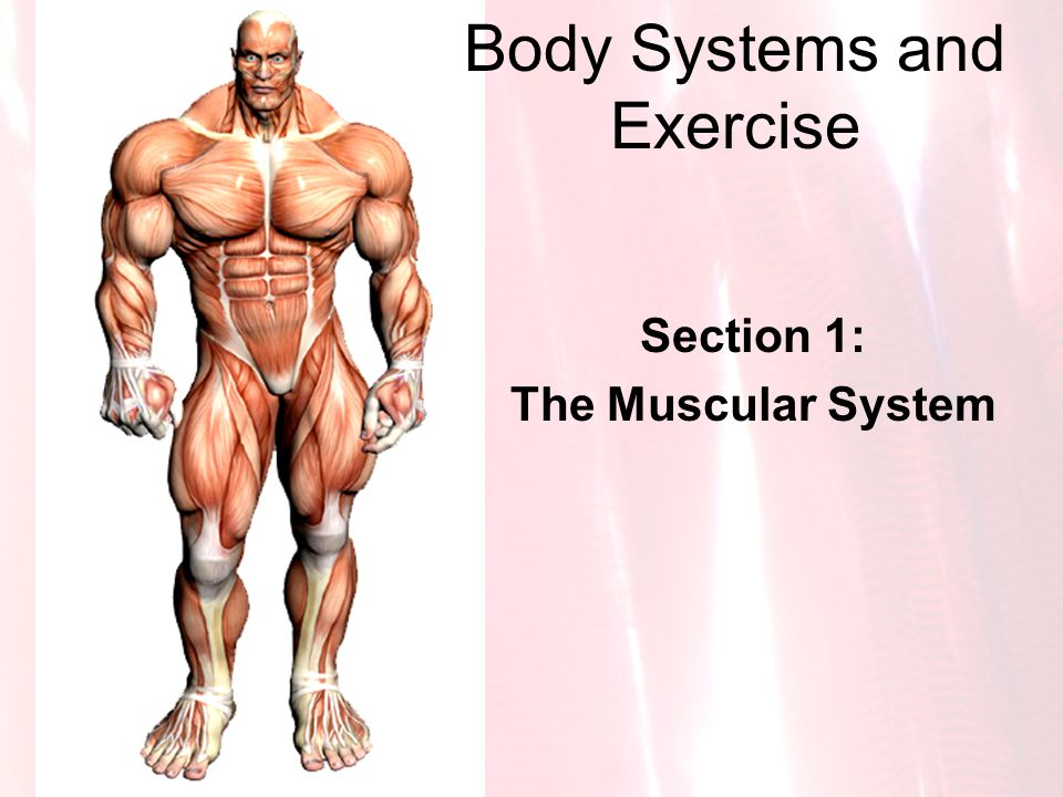 Body Systems and Exercise