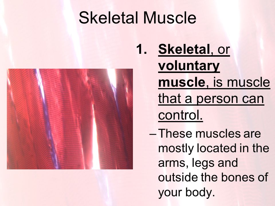 Skeletal Muscle Skeletal, or voluntary muscle, is muscle that a person can control.