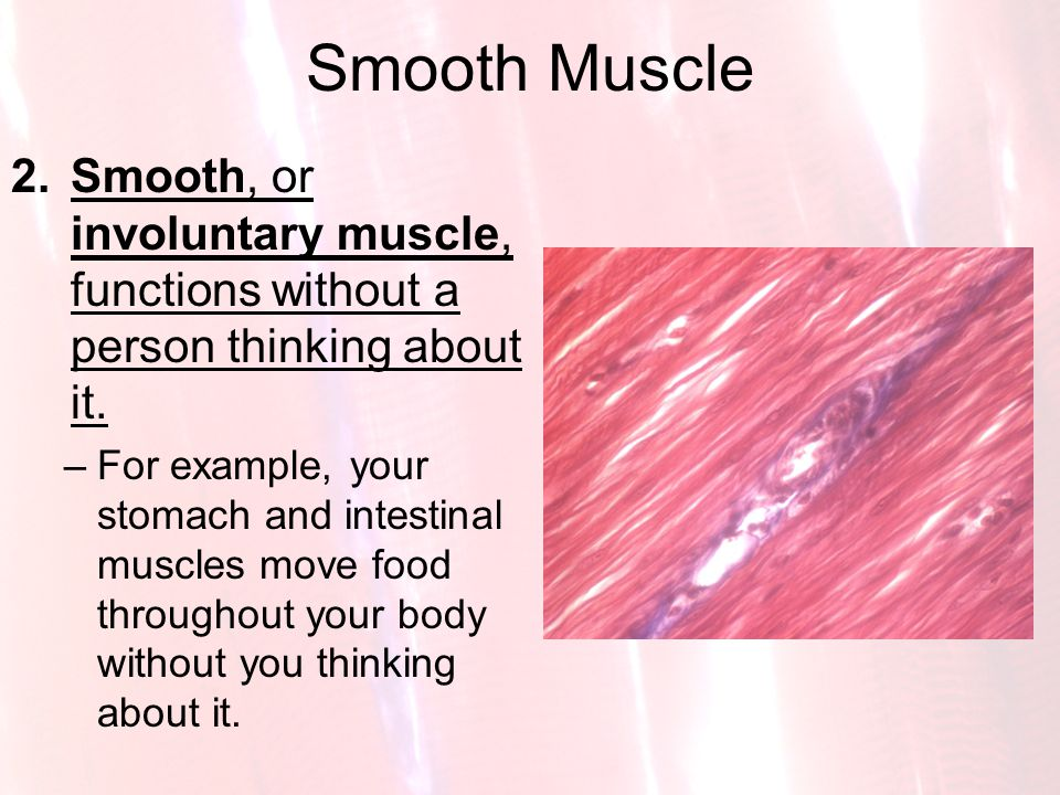 Smooth Muscle Smooth, or involuntary muscle, functions without a person thinking about it.
