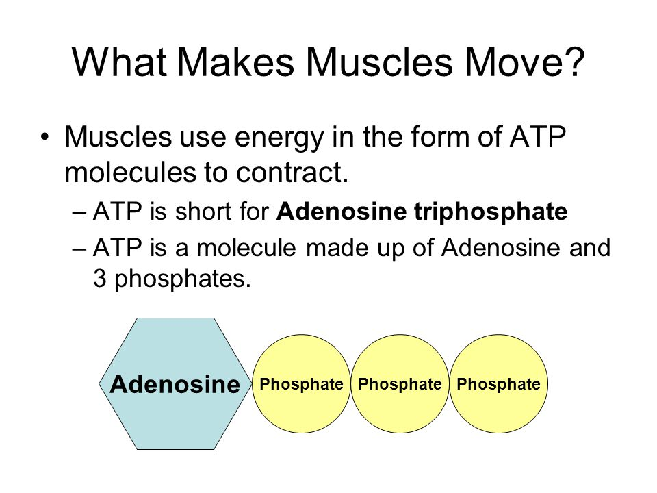 What Makes Muscles Move