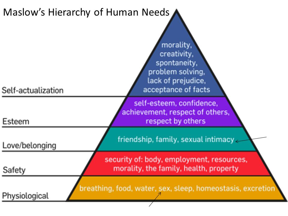 stages of maslows hierarchy
