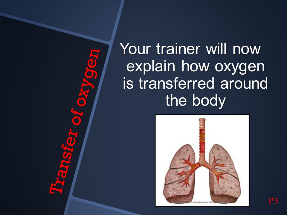 Your trainer will now explain how oxygen is transferred around the body