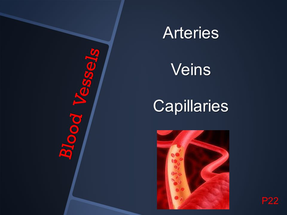 Arteries Veins Capillaries Blood Vessels P22