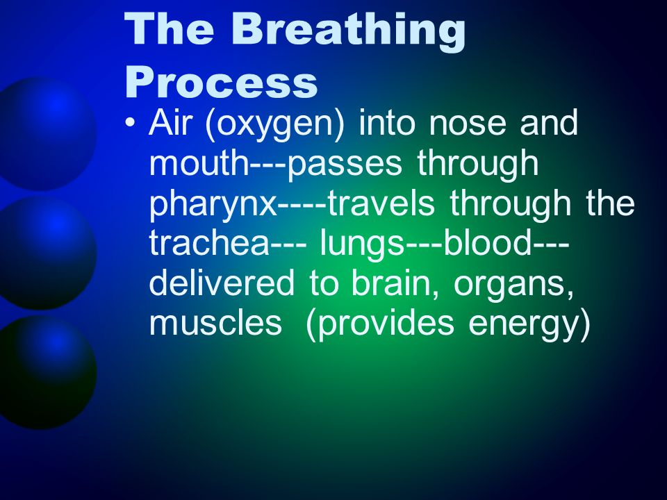The Breathing Process