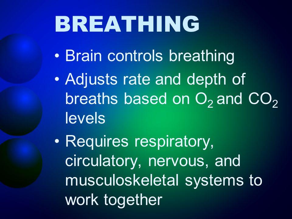 BREATHING Brain controls breathing