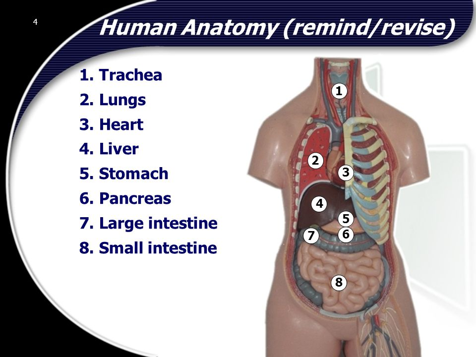 Human Anatomy (remind/revise)