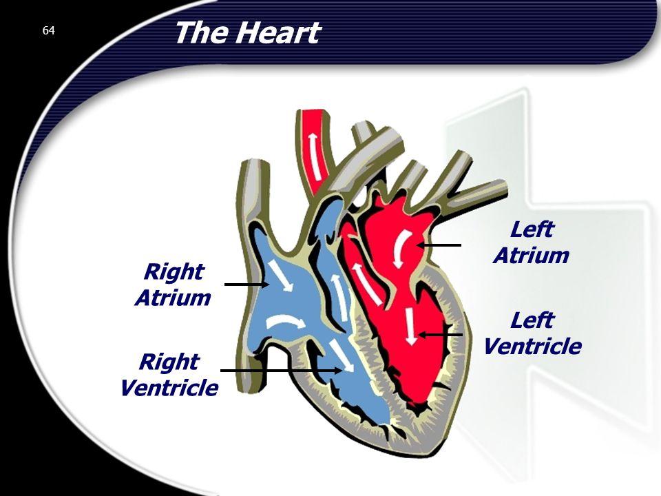 The Heart Left Atrium Right Atrium Left Ventricle Right Ventricle 64