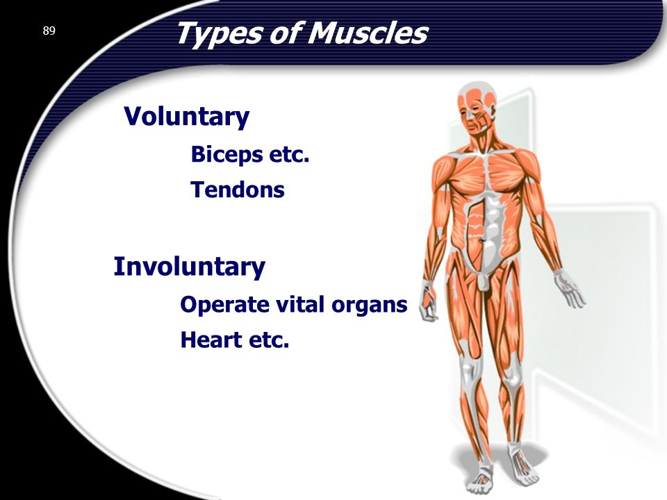 Types of Muscles Voluntary Involuntary Biceps etc.