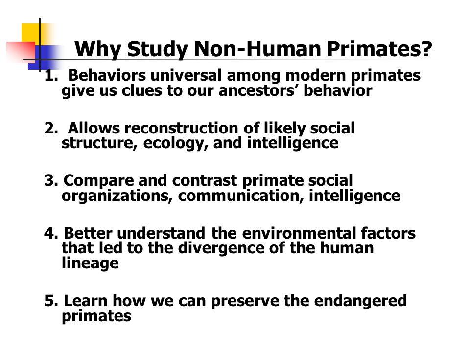 Why Study Non-Human Primates