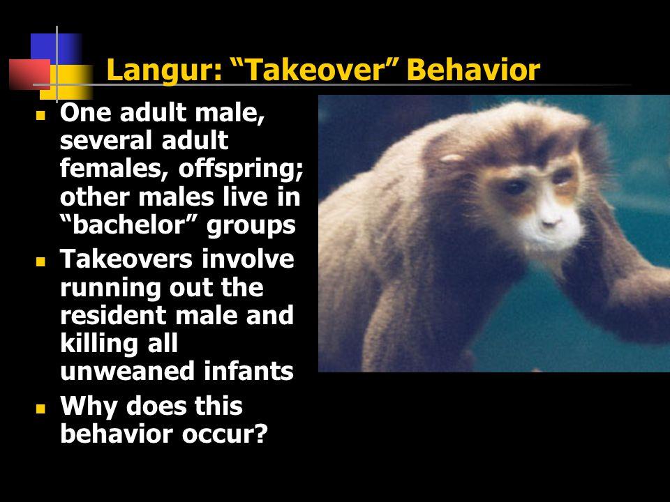 Langur: Takeover Behavior