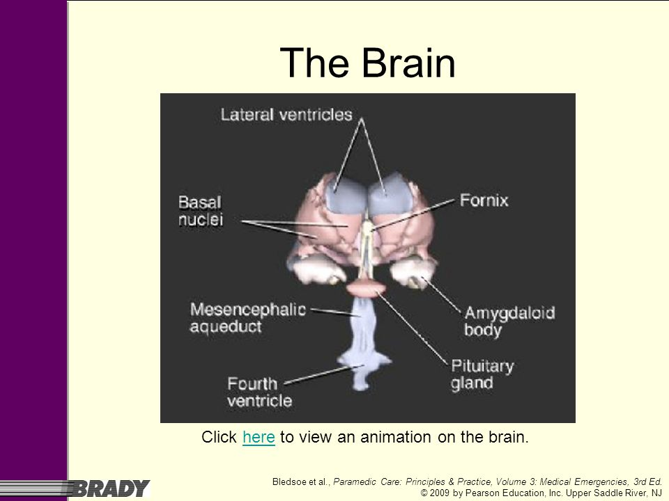 Click here to view an animation on the brain.