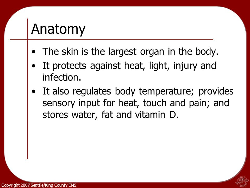 Anatomy The skin is the largest organ in the body.
