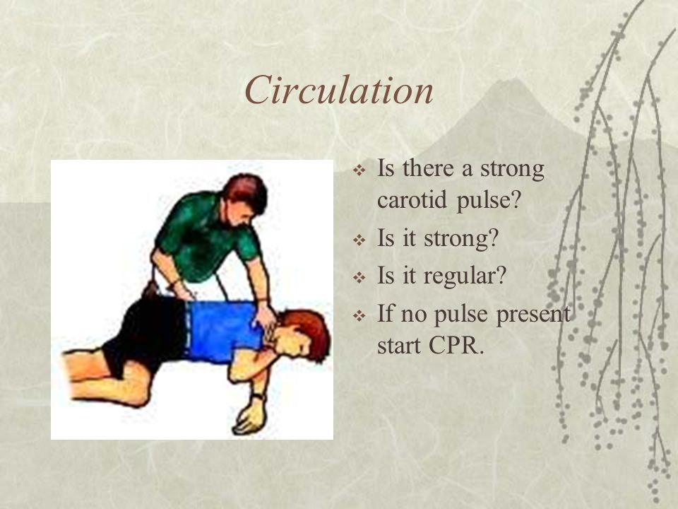 Circulation Is there a strong carotid pulse Is it strong