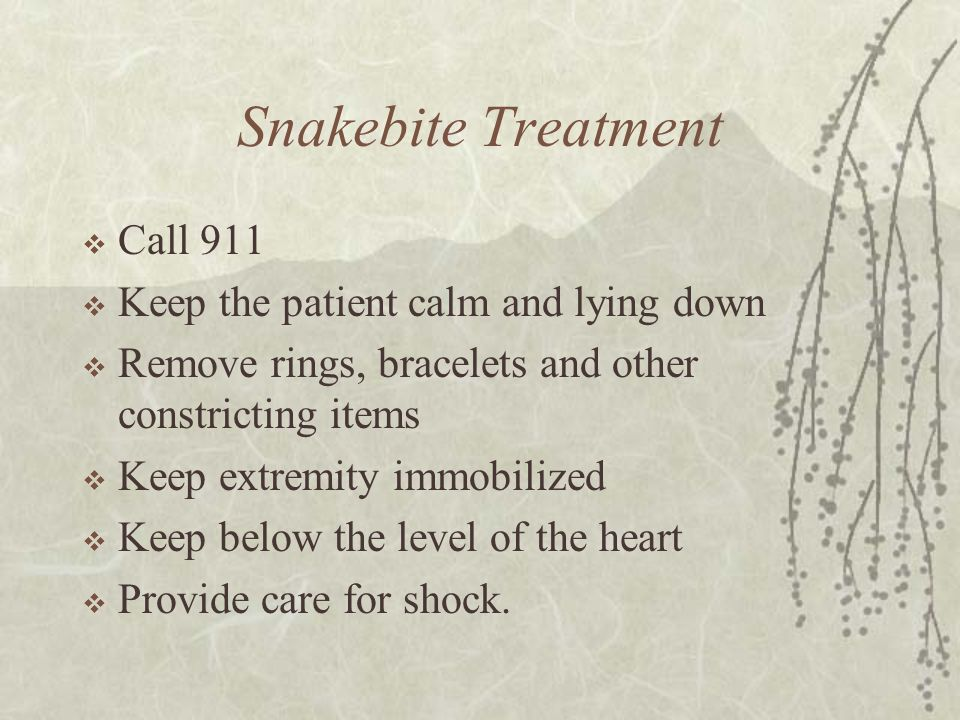 Snakebite Treatment Call 911 Keep the patient calm and lying down