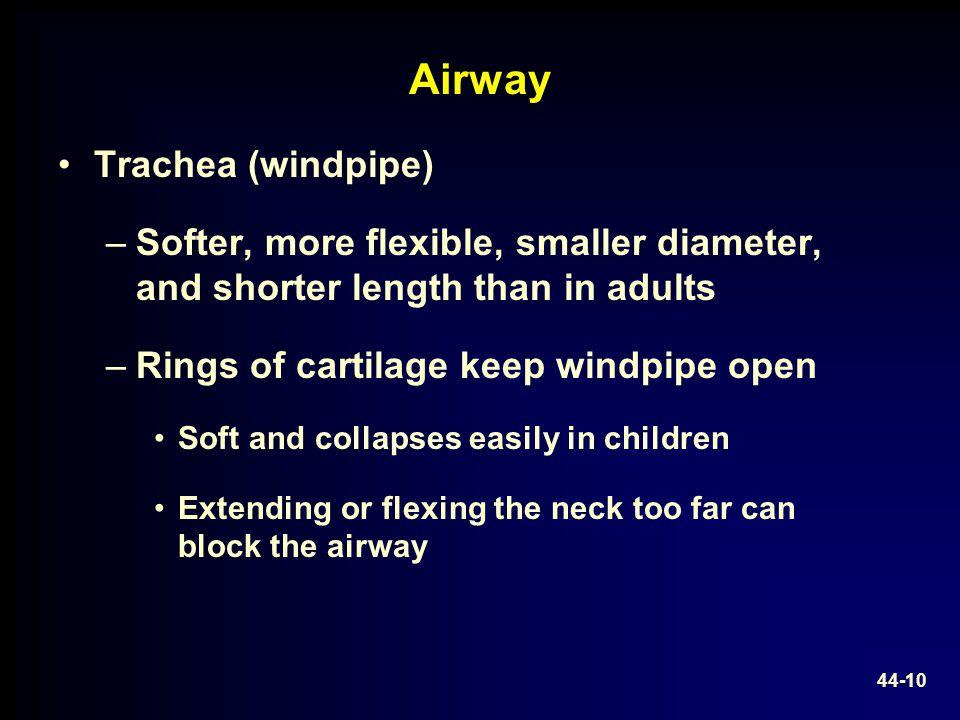 Airway Trachea (windpipe)