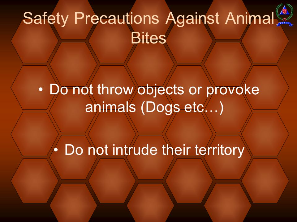 Safety Precautions Against Animal Bites