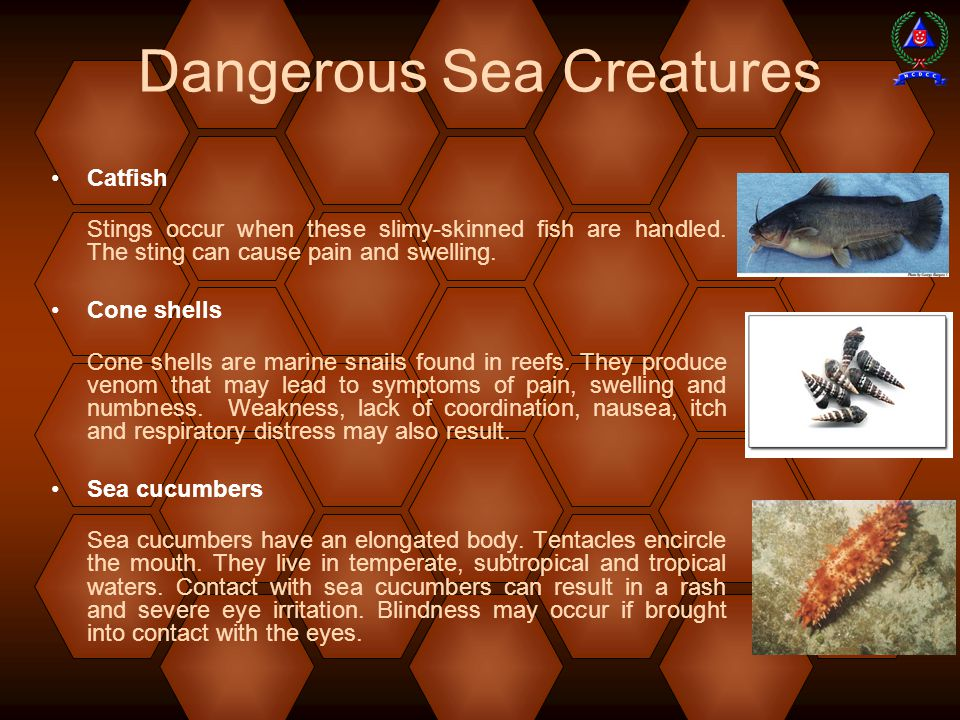 Dangerous Sea Creatures