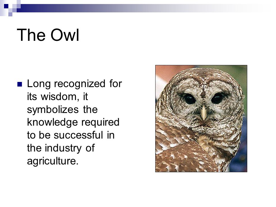 The Owl Long recognized for its wisdom, it symbolizes the knowledge required to be successful in the industry of agriculture.