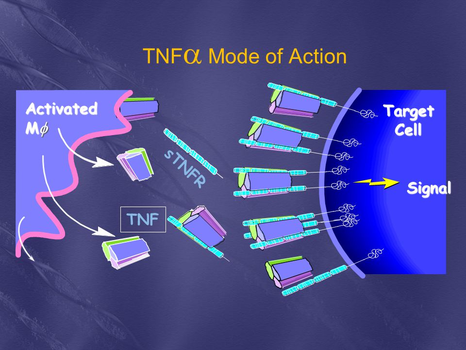 TNF Mode of Action Activated Target Mf Cell sTNFR Signal TNF
