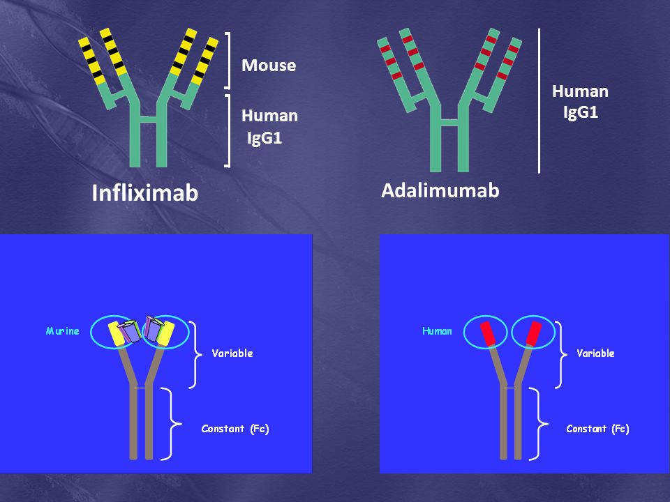 Infliximab Adalimumab Mouse Human IgG1 Human IgG1 Ximab- chimeric
