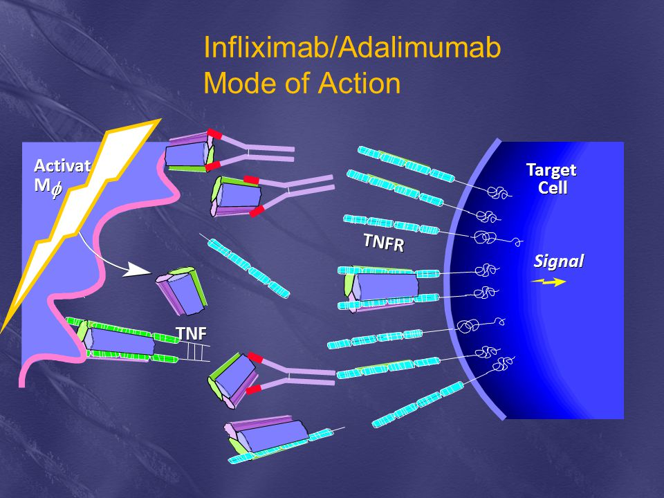 Infliximab/Adalimumab Mode of Action
