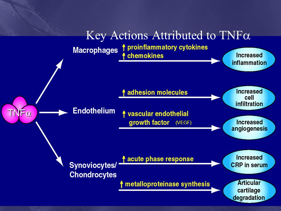 Key Actions Attributed to TNF
