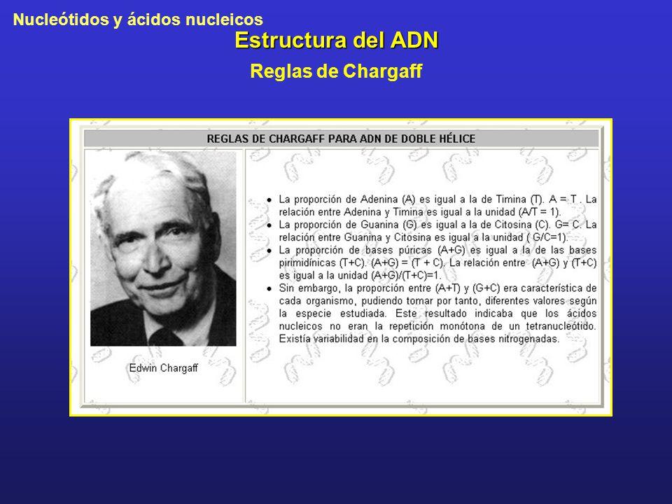 Estructura del ADN Reglas de Chargaff
