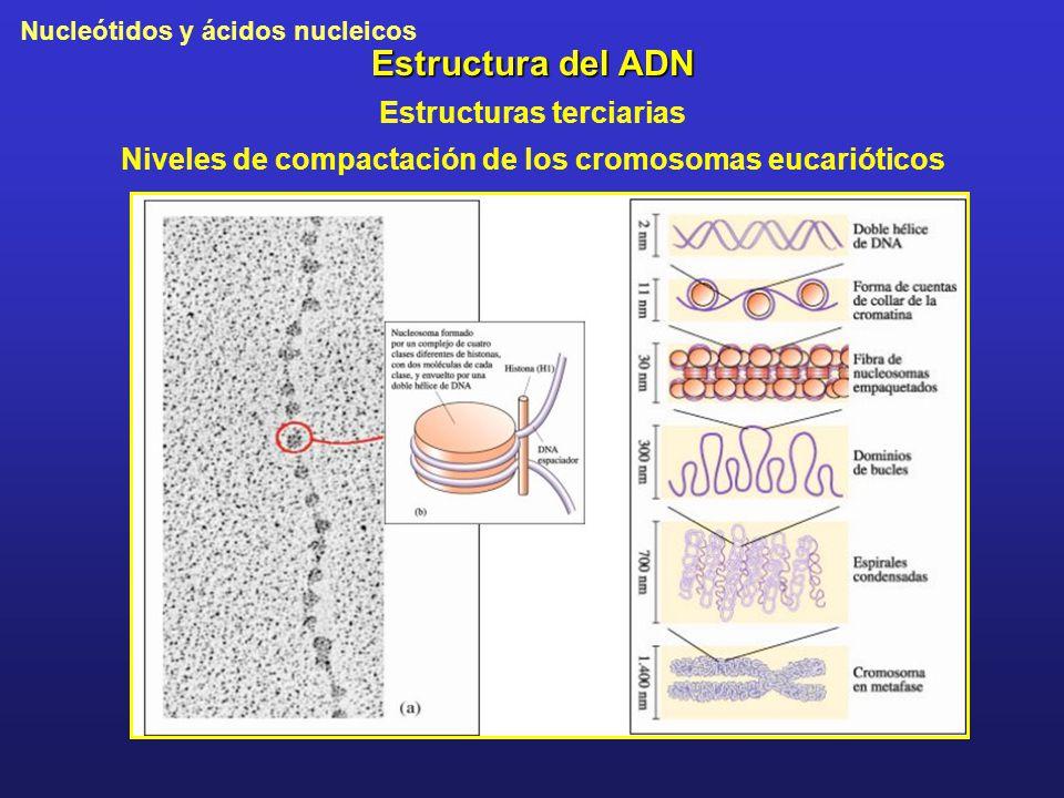 Estructura del ADN Estructuras terciarias
