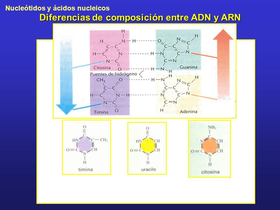 Diferencias de composición entre ADN y ARN