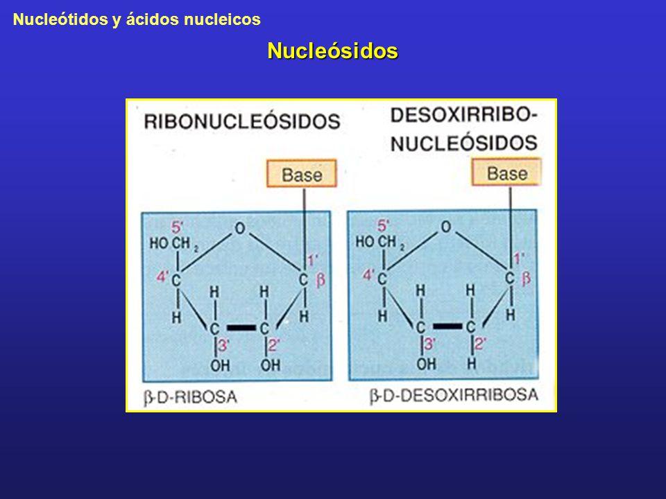 Nucleósidos