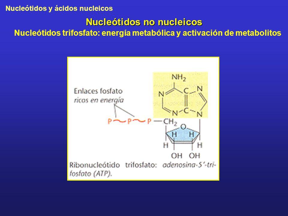 Nucleótidos no nucleicos