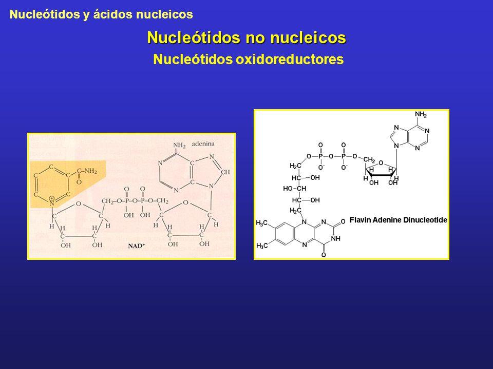 Nucleótidos no nucleicos Nucleótidos oxidoreductores