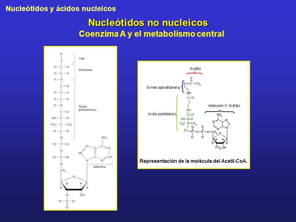 Nucleótidos no nucleicos Coenzima A y el metabolismo central