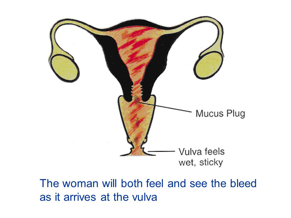 The woman will both feel and see the bleed as it arrives at the vulva