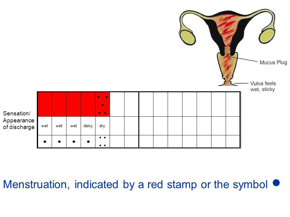 Menstruation, indicated by a red stamp or the symbol 