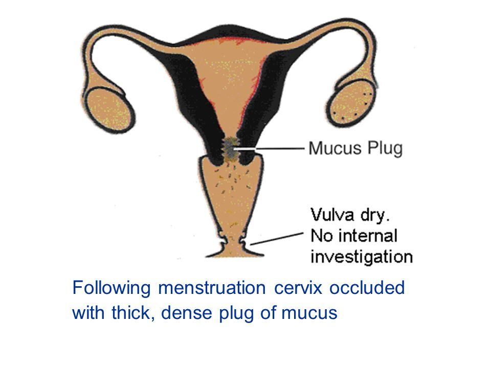 Following menstruation cervix occluded