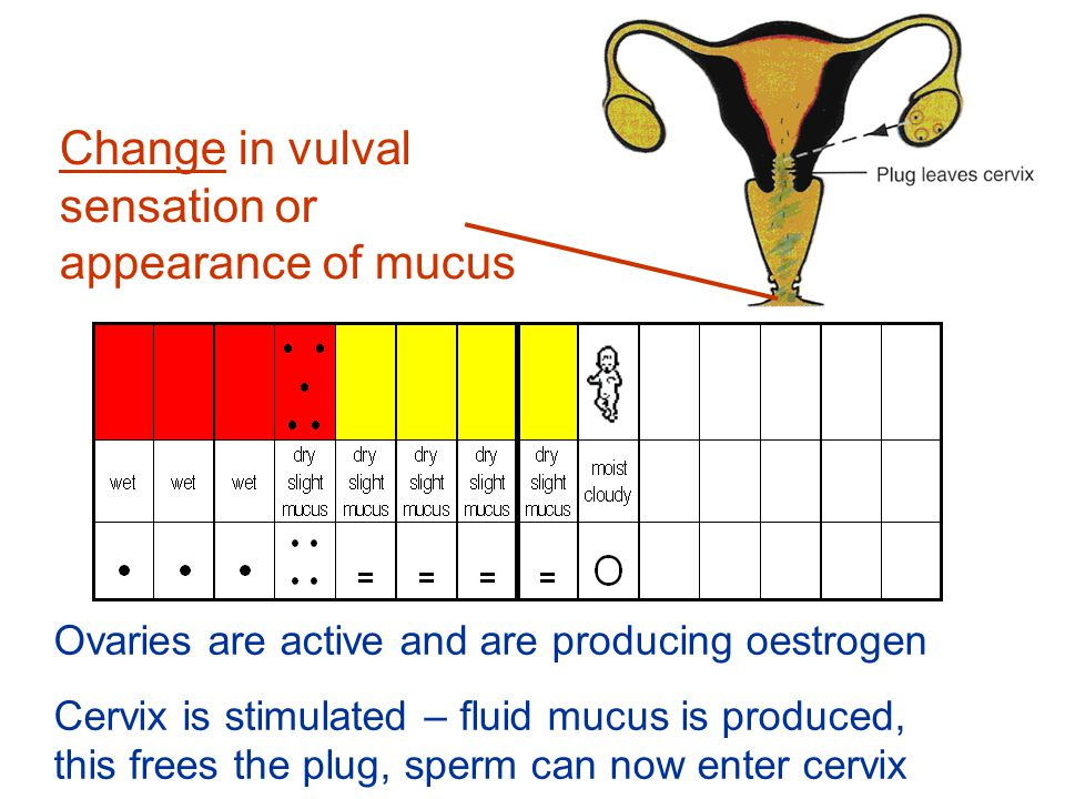 Change in vulval sensation or appearance of mucus